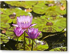 Pink Tropical Water Lilly Acrylic Print