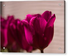 Acrylic Print featuring the photograph Pink Tulip by Erin Kohlenberg