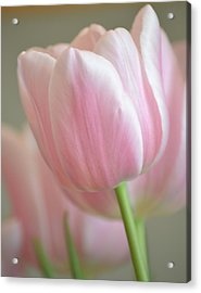 Pink Tulip Floral Acrylic Print