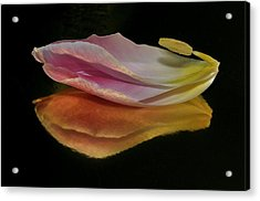 Pink Tulip Petal Reflected On Black Acrylic Print