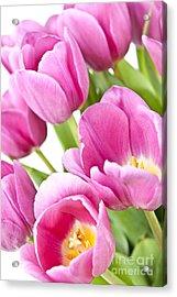 Pink Tulips Acrylic Print by Elena Elisseeva