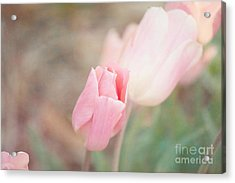 Pink Tulips Acrylic Print by Kay Pickens