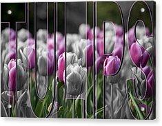 Pink Tulips Acrylic Print by Trish Tritz