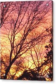 Pink Twilight Acrylic Print