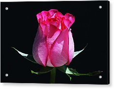 Acrylic Print featuring the photograph Pink Upstart by Doug Norkum