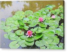 Pink Water Lilies, Lake View Hotel Acrylic Print