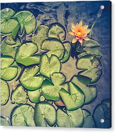 Pink Water Lily And Pads Acrylic Print