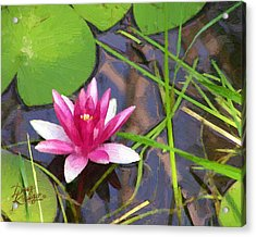 Acrylic Print featuring the painting Pink Water Lily by Doug Kreuger