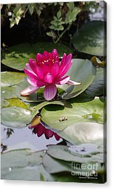 Pink Water Lily Acrylic Print by Tannis  Baldwin