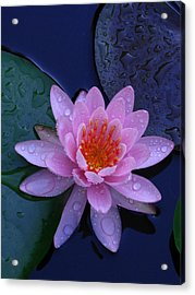 Acrylic Print featuring the photograph Pink Waterlily by Raymond Salani III