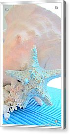 Pink White And Blue Conch And Sea Shells  Acrylic Print by Danielle  Parent