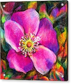 Pink Wild Flower. Alberta Flood Project Acrylic Print
