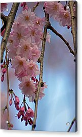 Pink With Blue Sky Acrylic Print