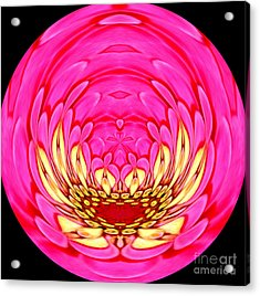 Acrylic Print featuring the photograph Pink Zinnia Polar Coordinate 2 by Rose Santuci-Sofranko