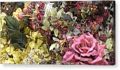 Pinkel Rose Acrylic Print