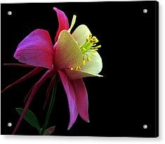 Pinkish Acrylic Print