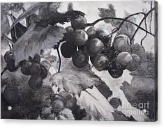 Pinot Noir Acrylic Print by Mary Lynne Powers