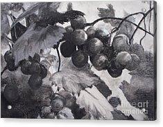 Pinot Noir Acrylic Print