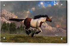 Pinto Mustang Galloping Acrylic Print by Daniel Eskridge