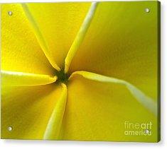 Pinwheel Plumeria Acrylic Print by Joy Hardee