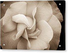 Pinwheel Rose Acrylic Print