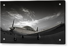 Piper Arrow Acrylic Print