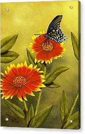 Pipevine Swallowtail And Blanket Flower Acrylic Print by Rick Bainbridge