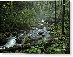 Pisgah Forest  Acrylic Print