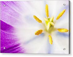 Pistil And Stamen Acrylic Print