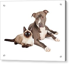 Pit Bull Dog And Siamese Cat Acrylic Print