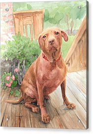 Pitbull Watercolor Portrait Acrylic Print by Mike Theuer