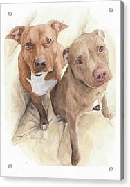 Pitbulls Watercolor Portrait Acrylic Print by Mike Theuer