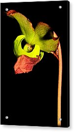 Pitcher Me Perfect.... Acrylic Print