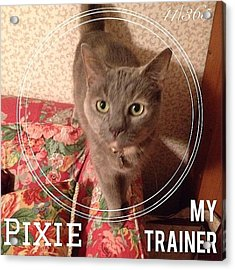#pixie Is My Official #trainer While I Acrylic Print