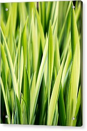 Plant Abstract 3 Acrylic Print by Rebecca Cozart