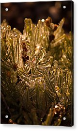 Plant Covered In Ice Acrylic Print by Dave Garner