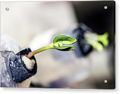 Plant Growing On The Iss Acrylic Print