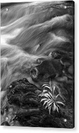 Little Plant Acrylic Print by Jon Glaser