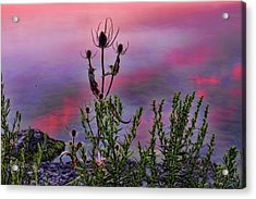 Plant Life By The Water Acrylic Print