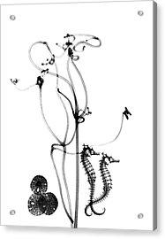 Plant Tendrils And Seahorses Acrylic Print by Albert Koetsier X-ray