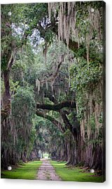 Plantation Path Acrylic Print