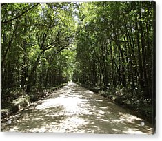 Plantation Road Acrylic Print