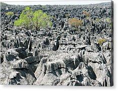 Plants Growing On Limestone Rocks Acrylic Print by Dr P. Marazzi