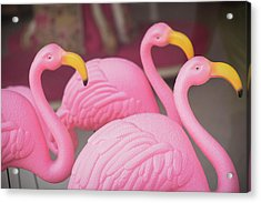 Plastic Pink Flamingos, Charleston Acrylic Print by Julien Mcroberts