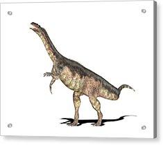 Plateosaurus Dinosaur Acrylic Print