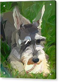 Play Ball Acrylic Print by Patti Siehien