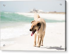 Play Buddy Acrylic Print by Shelby  Young