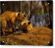Play Time Acrylic Print by Thomas Young