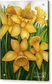 Playful Daffodils Acrylic Print by Vikki Wicks