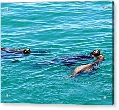 Playful Acrylic Print by Dick Botkin